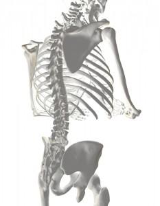 姿勢と背骨の歪み