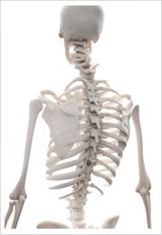 椎骨の歪み画像